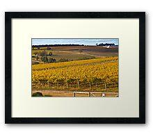 Autumn Vineyard - May 2011 Framed Print