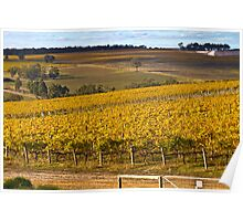 Autumn Vineyard - May 2011 Poster