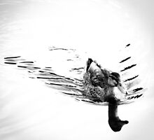 Duck in B&W by MDR-Design