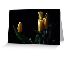 Yellow tulip in black background  Greeting Card
