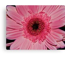 Neon Pink Canvas Print