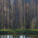 Waiting for Spring by Marzena Grabczynska Lorenc