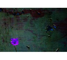 Decaying light Photographic Print