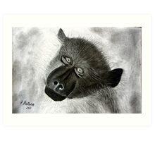 Chacma Baboon  ~  Kaapse Bobbejaan Art Print