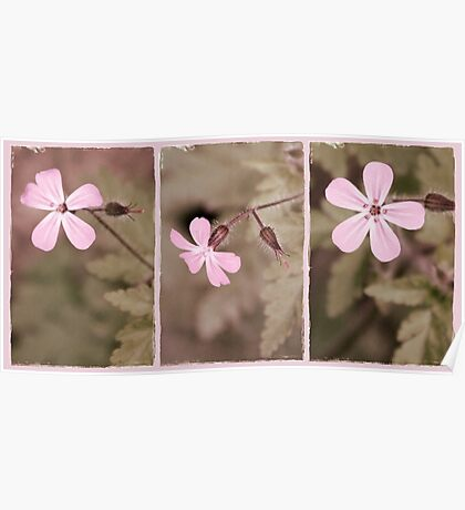 Pale Pink Triptych Poster