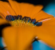 Orange Macro Flower by Steve Neville