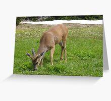 Deer at Hurricane Ridge Greeting Card