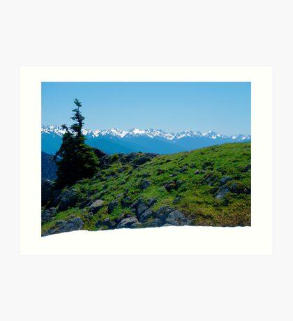 Overly-green Hillside at Hurricane  Ridge Art Print