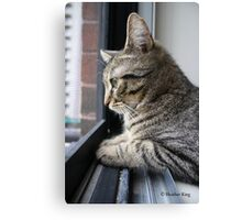 Day Dreaming Canvas Print
