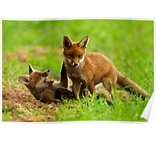 Playing Fox Cubs Poster
