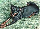 Dobermann Dog Portrait by Nicole Zeug