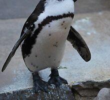 Profile Penguin by dizzyshell42
