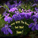 Get Well Soon - Blue Lobelia by Heather Friedman