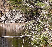 Beaver Lodge, Gatineau Park, Quebec by Shulie1