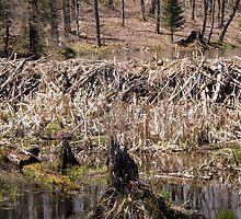 Beaver Dam - Gatineau Park,  Quebec, Canada by Shulie1