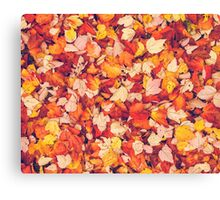 Scarlet Leaves  Canvas Print