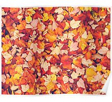 Scarlet Leaves  Poster