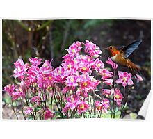 Hummingbird and the Columbine Flowers  Poster
