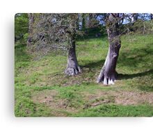 Ent walking down a hill Canvas Print
