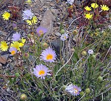Wild Flowers Close UP by marilyn diaz