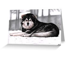 Alaskan Malamute Dog Portrait Greeting Card