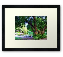 Woodland Park Pond Framed Print