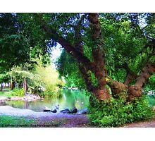 Woodland Park Pond Photographic Print