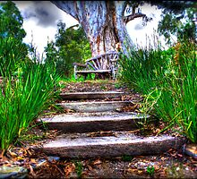 stairway to the forest by mirekkrejci