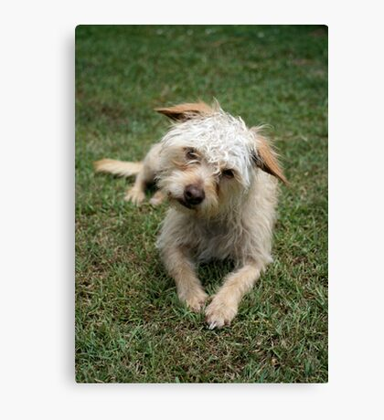 furry dog Canvas Print