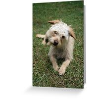 furry dog Greeting Card