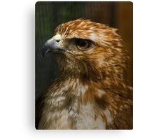 Red Tail Intensity Canvas Print