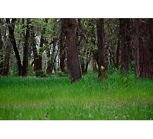 River Meadow Photographic Print