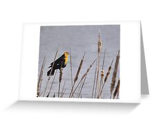 A True Blond - Xanthocephalus xanthocephalus Greeting Card
