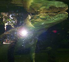 Crocodile by Robert Phillips
