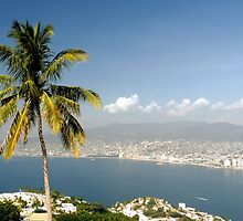 Palms of Acapulco by Stephen  Saysell