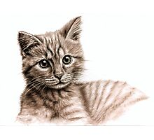 Little Kitten - what's up? Photographic Print