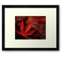 One red leaf Framed Print