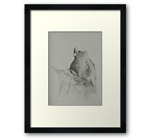 Galah on Acacia Framed Print