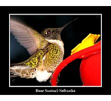 Incoming! (Ruby-Throated Hummingbird) Photographic Print