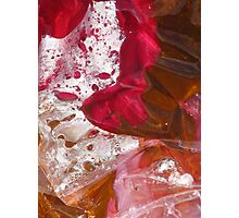 rose and leaf Photographic Print