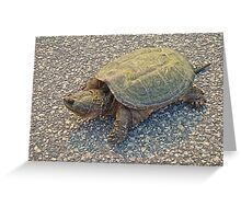 Common Snapping Turtle - Chelydra serpentina Greeting Card