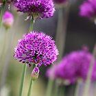 Allium Forest by Chrisdor