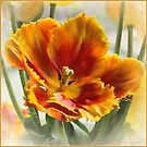 One More Tulip by Brenda Boisvert