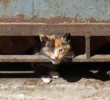 Stray kitten, Valparaiso, Chile. by David Pillinger