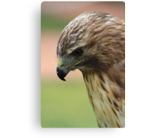 "Red-tailed Hawk - ""Amanda"" Canvas Print"