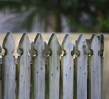 Picket Fence by aussiebushstick