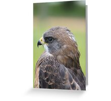 "Swainson's Hawk - ""Dusty"" Greeting Card"