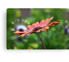 Another Side Of Nature.... Canvas Print