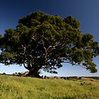 Maleny Tree by bluehorizons