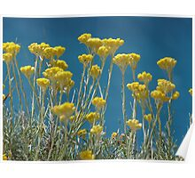 blue skys and flowers Poster